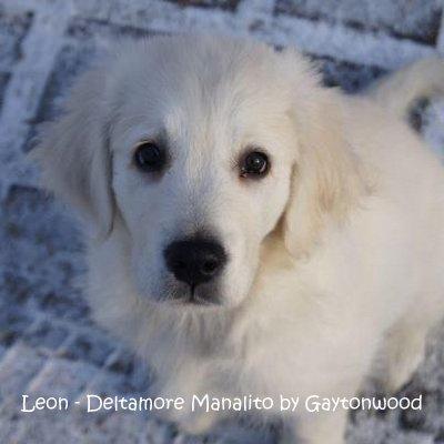 1-Leon snow