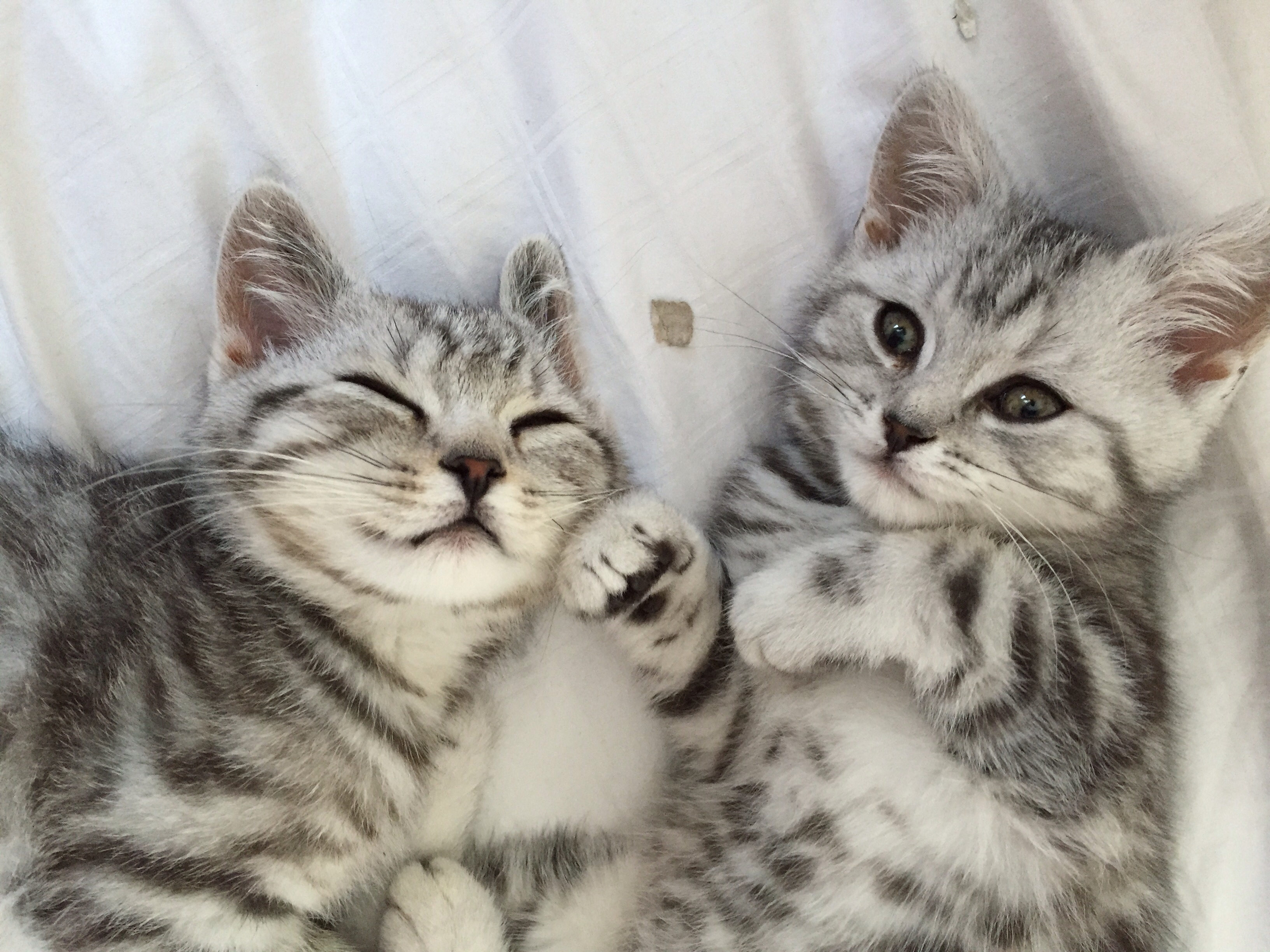 Frankie & Bennie