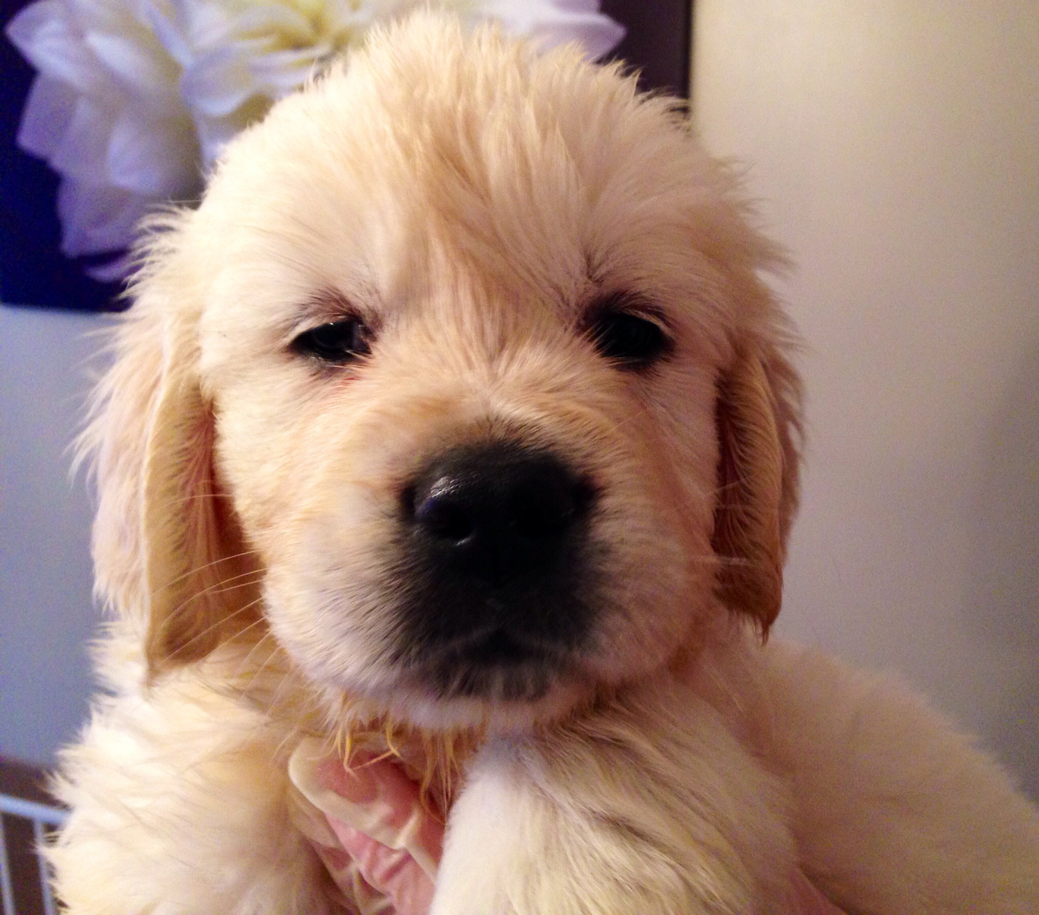 Bella's Puppy